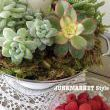 Succulents are so luscious and easy to care for...in fact it is downright impossible to kill them!